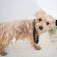 How-to-get-rid-of-wet-dog-odor