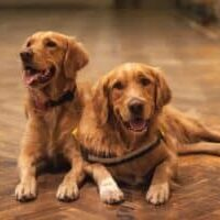 LOF-dogs-what-does-it-mean-and-how-to-recognize-them