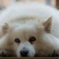 Leading-Causes-of-Sudden-Death-in-Dogs