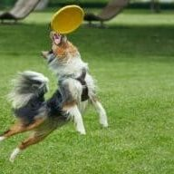 The-benefits-of-exercise-for-dog-health