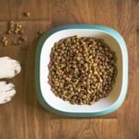 Types-of-dog-food-things-you-should-know