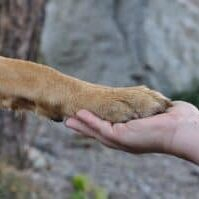 Types-of-dog-paw-injuries-and-how-to-intervene