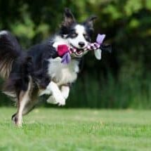 What-are-the-sportiest-dog-breeds