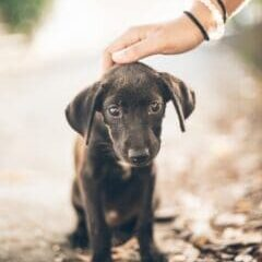 What-do-you-need-to-know-before-adopting-a-puppy