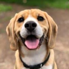 Which-Dog-Breeds-Bark-the-Most